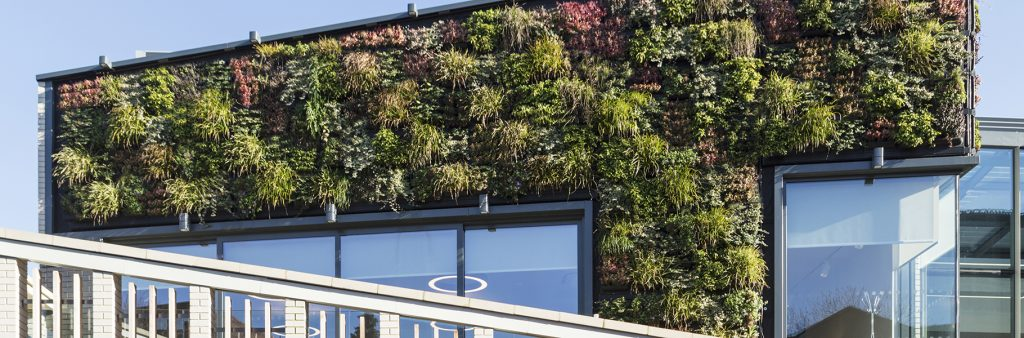 living-wall-outside-house